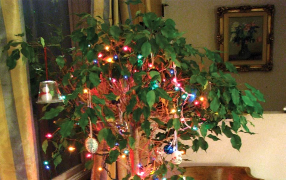 ficus-christmas.jpg