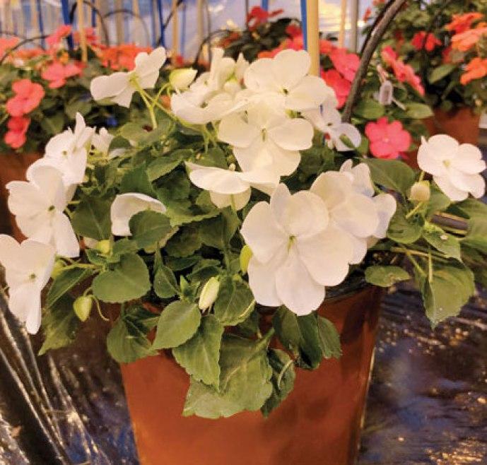 20180528B www.growertalks.com.jpeg