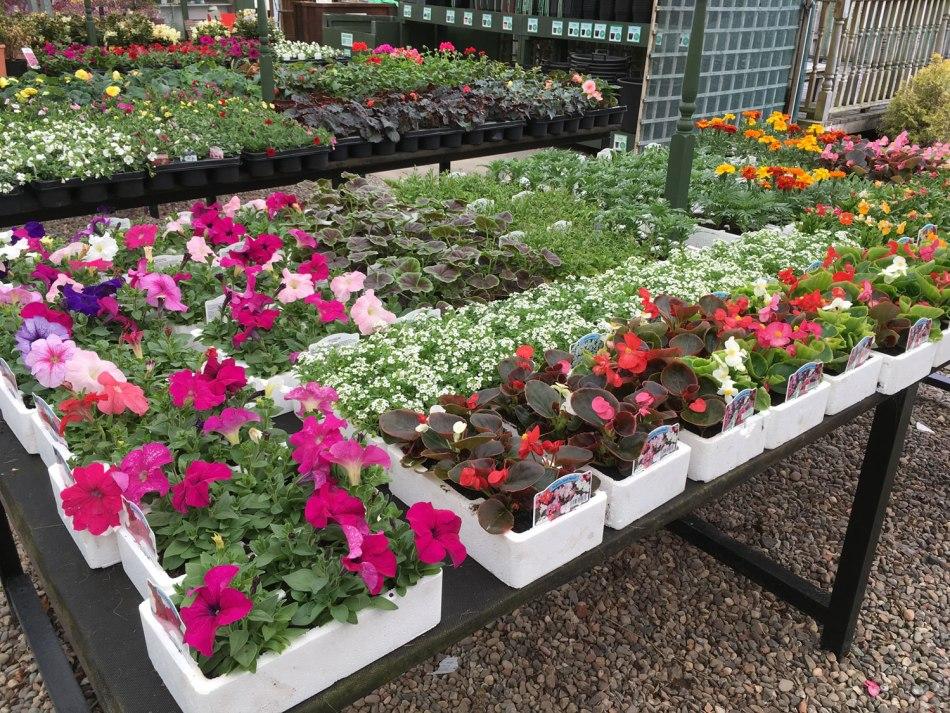 Summer-Bedding-Plants-at-Hedgehogs-Nursery.jpg