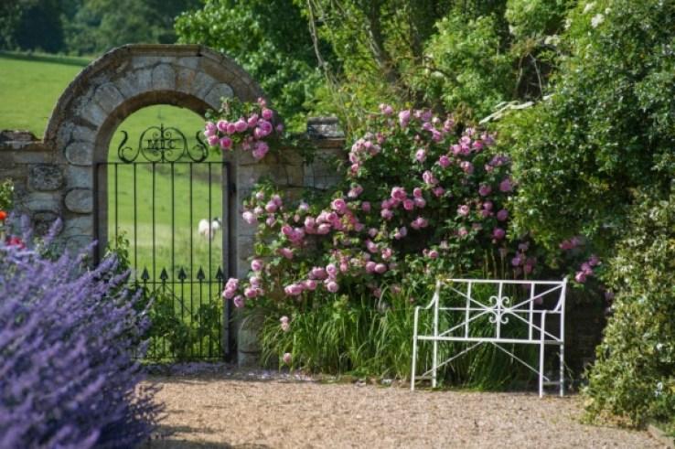 20181222C Constance Spry, DA Roses.jpg