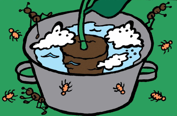 Traitement tuer les insectes dans une pot: seau, eau savonneuse, insectes qui se noient.