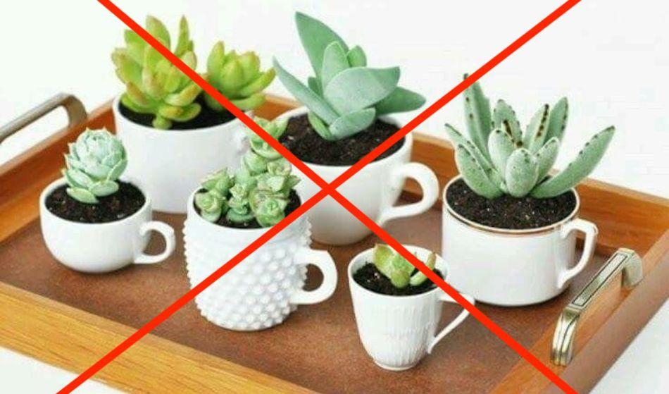 Succulentes plantées dans des tasses de thé. Un gros X rouge indique que c'est une erreur.