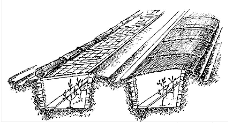 Tranchées d'agrumes en préparation pour l'hiver.