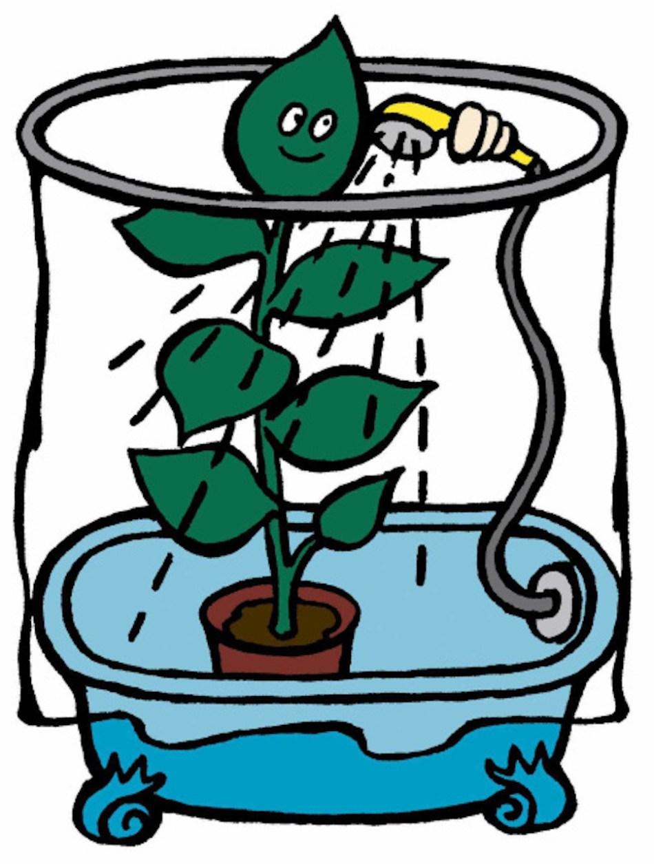 Plante sous la douche.
