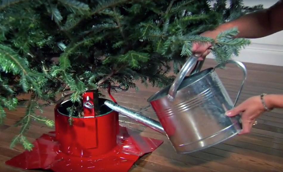 On remplit un support pour sapin de Noël avec un arrosoir.