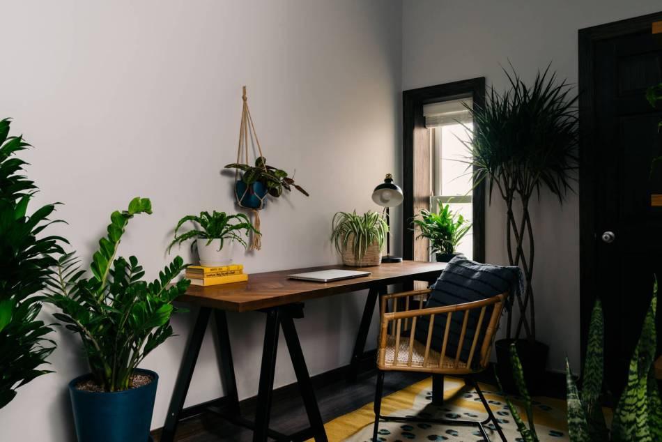 Bureau à domicile avec plusieurs plantes.