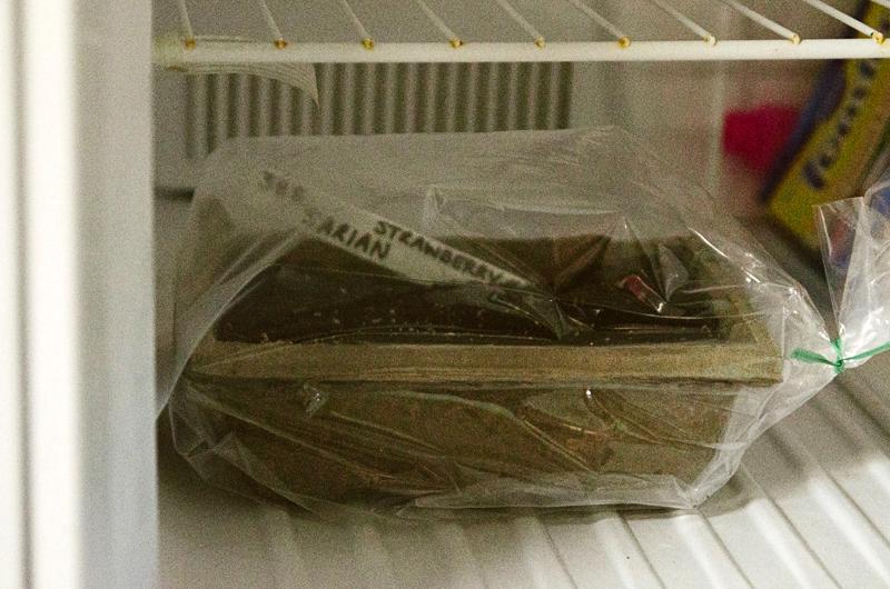 Plateau de semis de fraisier au réfrigérateur