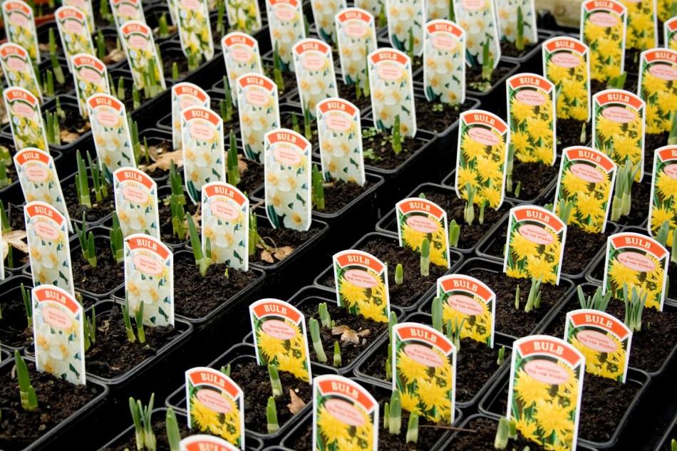Étiquettes des plantes avec images de couleur.