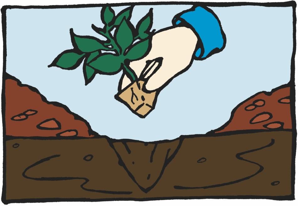 Main qui plante un semis au potager.