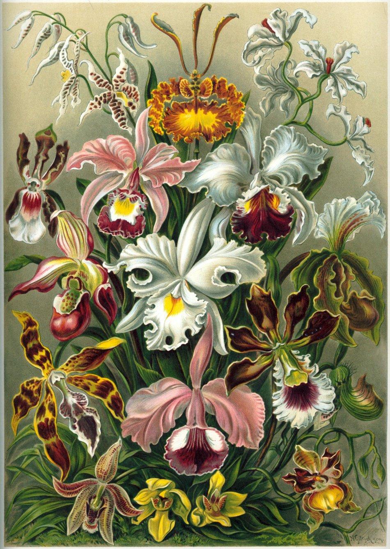 Illustration de plusieurs fleurs d'orchidée différentes.