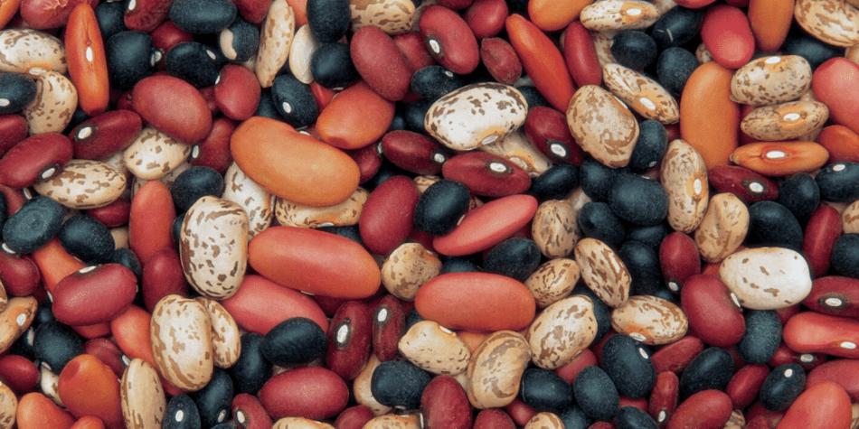 Différentes couleurs de haricots sec