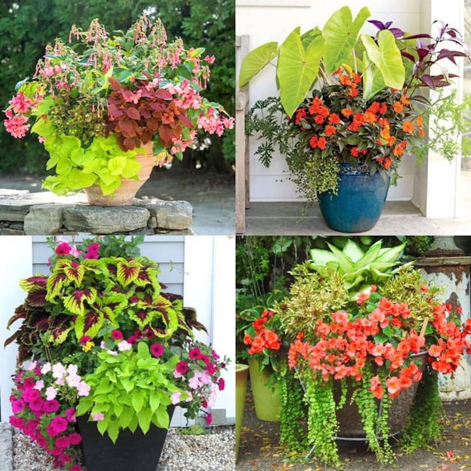 Arrangements en jardinière avec des plantes issues de boutures.