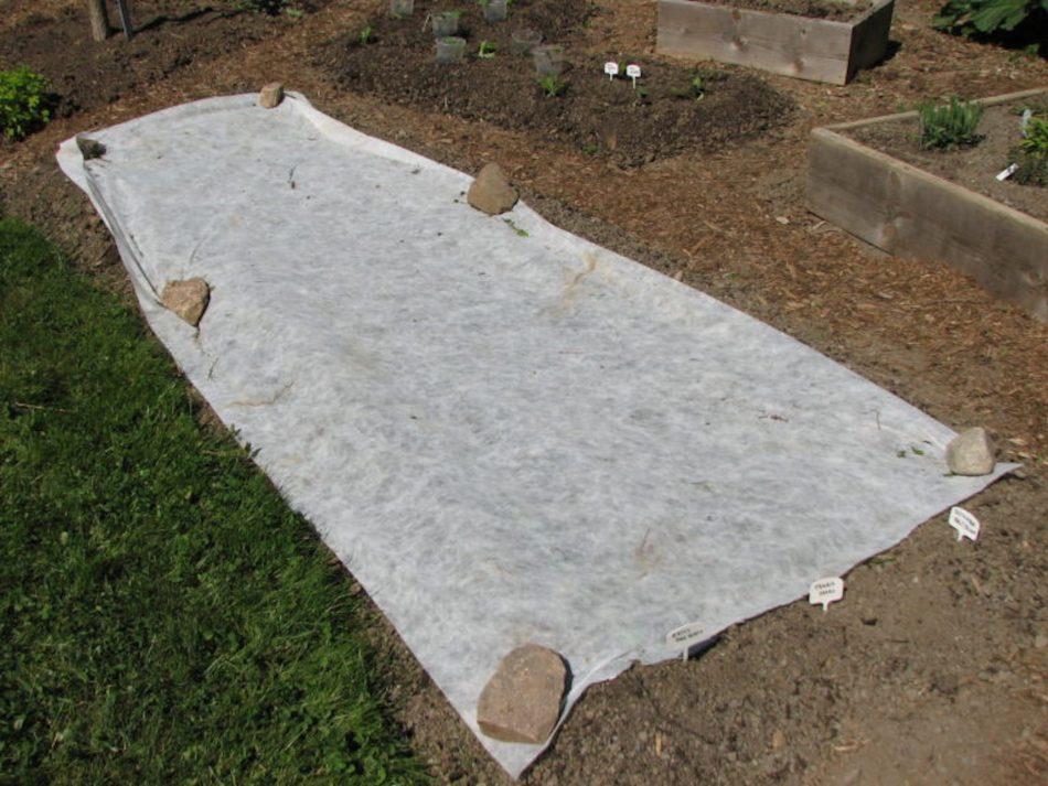 Toile flottante placée sur le sol d'un potager.