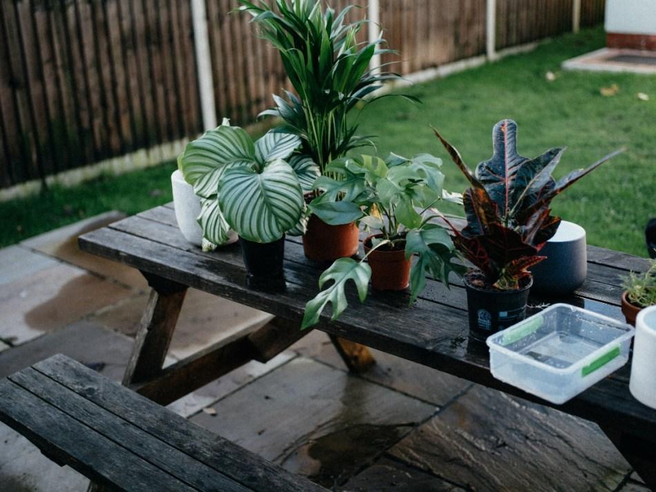 Plantes d'intérieur sur une table de pique-nique.