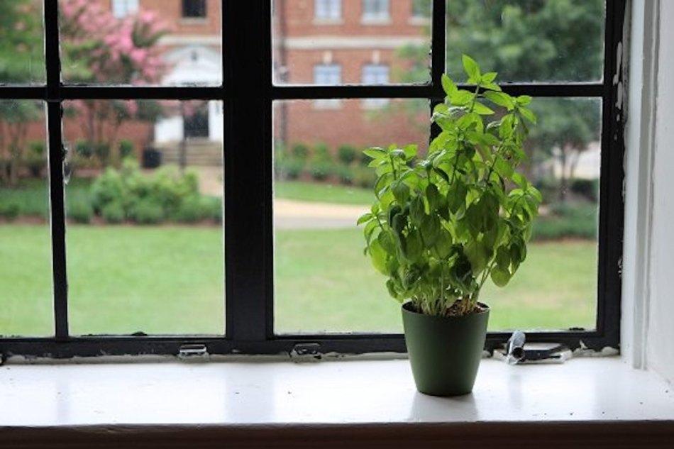 Plante d'intérieur toute seule sur un large rebord de fenêtre.