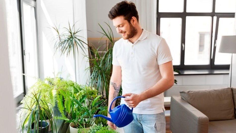 Homme qui arrose des plantes d'intérieur dans une pièce aux murs blancs.