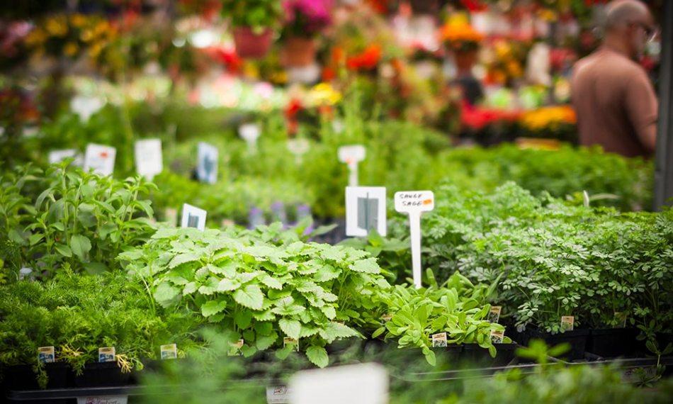 Étalage de fines herbes dans un marché public