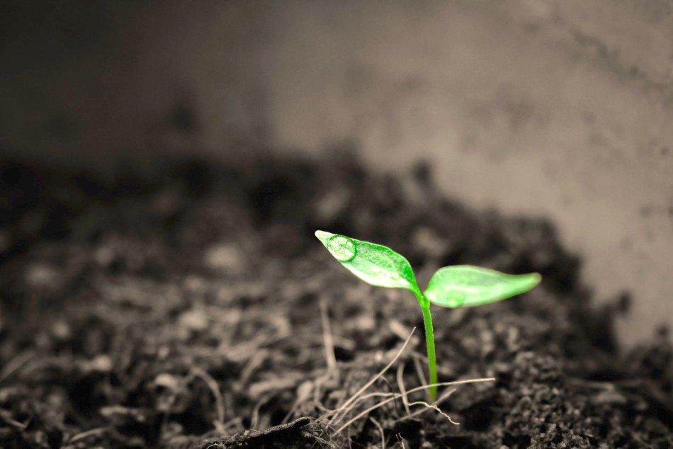 Semis fraîchement germé, entouré de terre