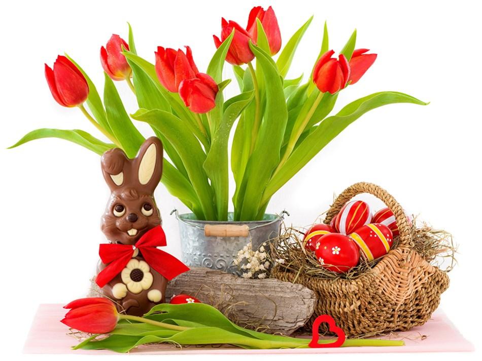 Tulipe rouge et oeufs et chocolats de Pâques