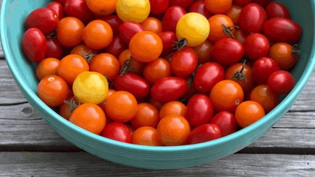 Mélange de tomates miniatures dans un bol bleu pâle.