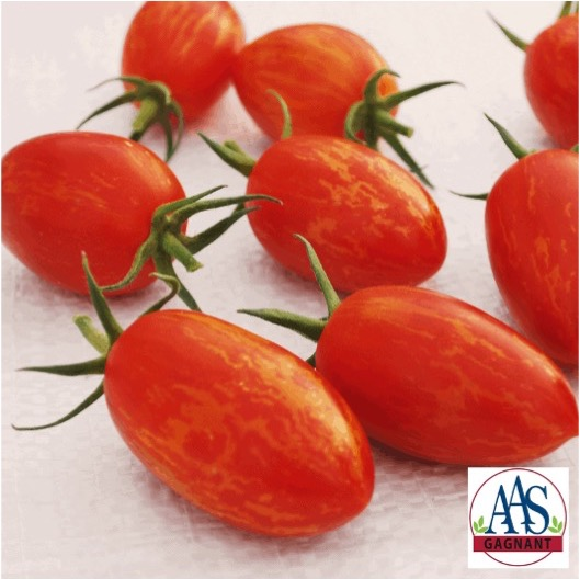 Tomate Red Torch aux fruits oblongs rouges striés jaune.