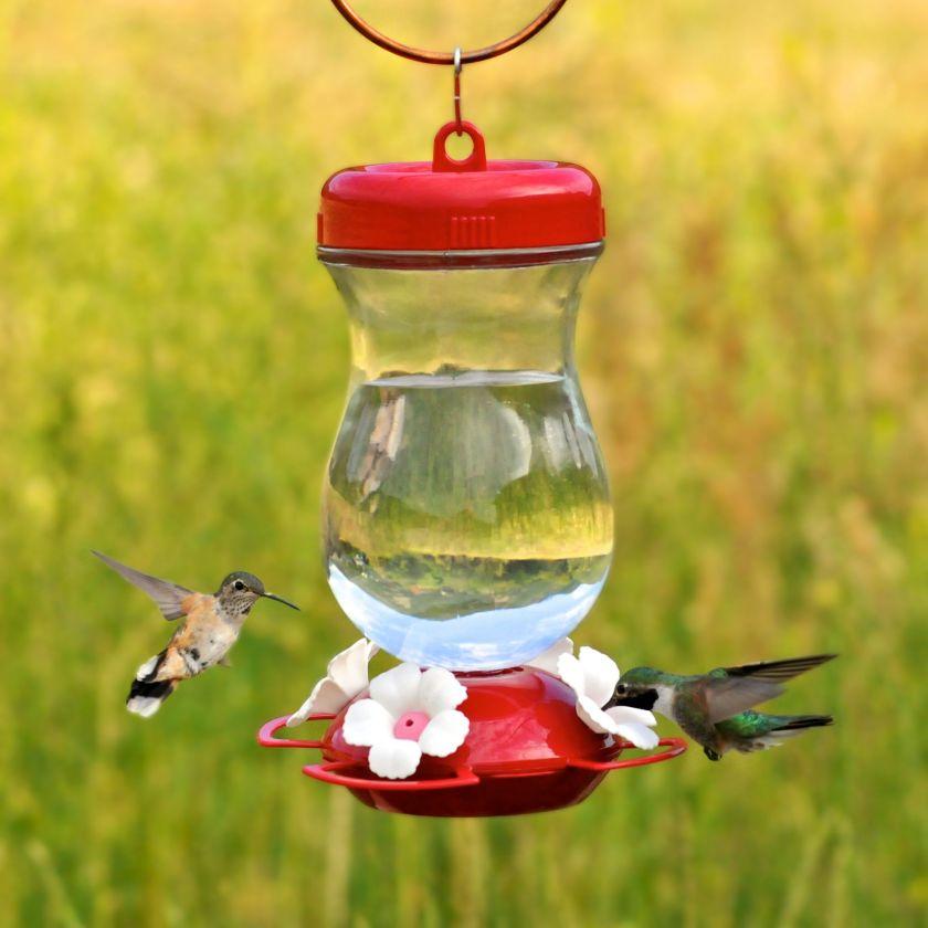 Colibris à gorge rubis mâles et femelles visitant une mangeoire.