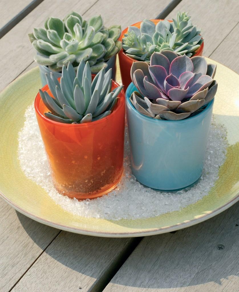 Echevérias en pot dans un emplacement ensoleillé.
