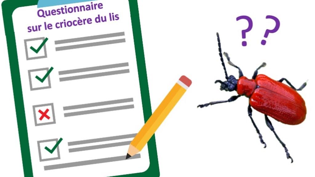 Illustration montrant le questionnaire à remplir avec un criocère du lis qui surveille.
