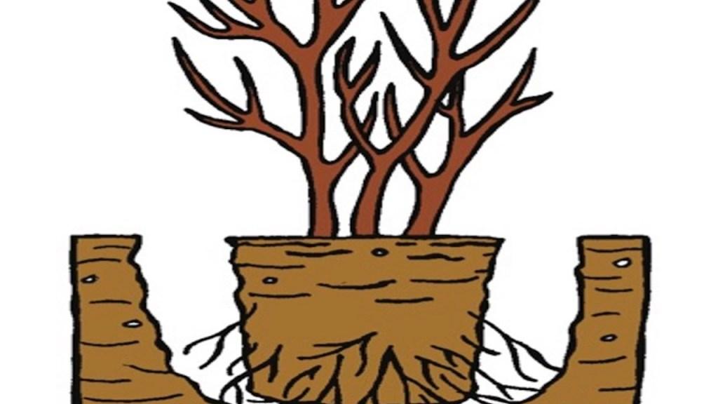 Motte de racines placée dans un trou de plantation sans ameublir le fond.