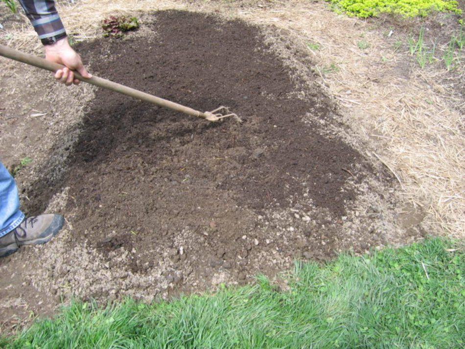 Application de compost au potager.