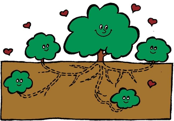 Arbuste mère entouré de drageons reliés par des racines.