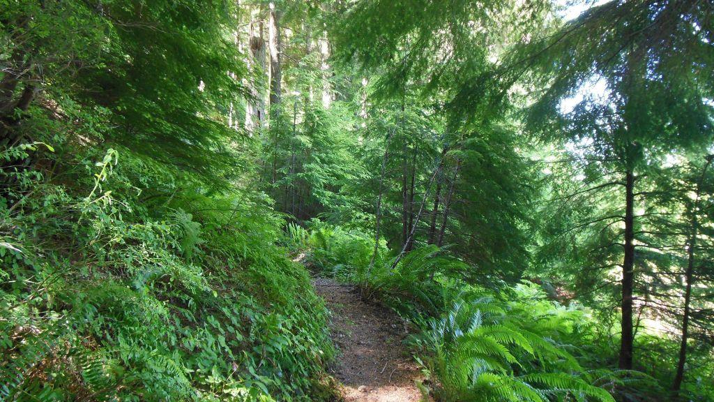 Forêt naturelle avec sentier