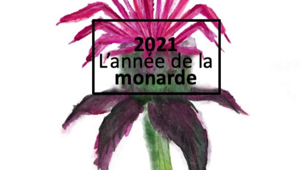 Logo de l'année de la monarde.