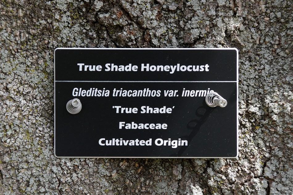 Étiquette d'identification fixée sur un tronc d'arbre.