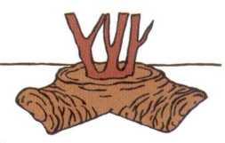 Étalez les moitiés dans les deux sens et recouvrez de terre.