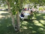 picnic table 3