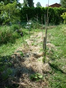 Un mulch de foin : rien de tel pour nourrir notre élevage souterrain de vers de terre !