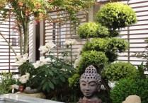 """Paris XV - Pivoines herbacées en fleurs et ilex crenata taillé """"à la japonaise"""""""