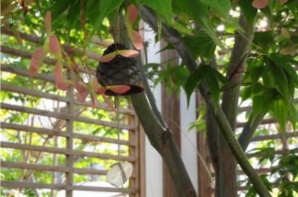Clochette de vent accroché à un des deux érables japonais de la terrasse