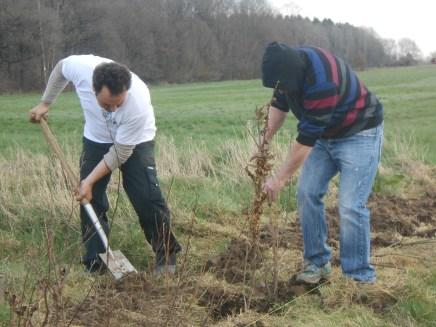 plantation du 17 mars 2017DSCN6436