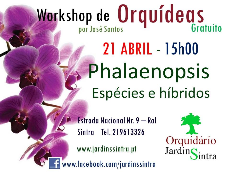 Workshop gratuito de Orquídeas de Abril