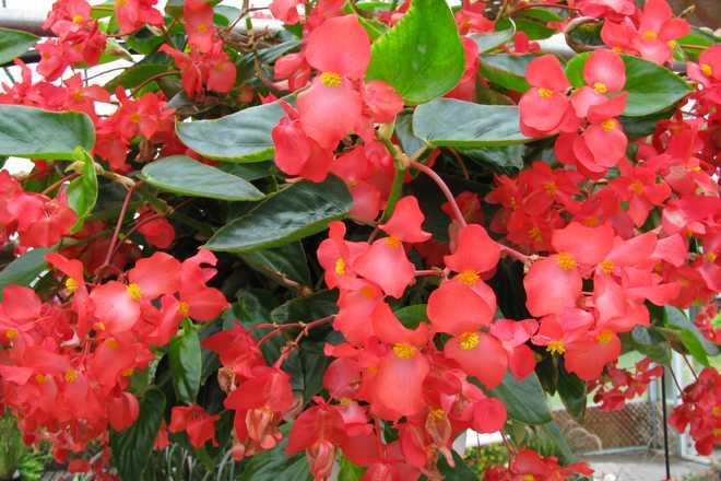 fleurs pour jardiniere liste guide de