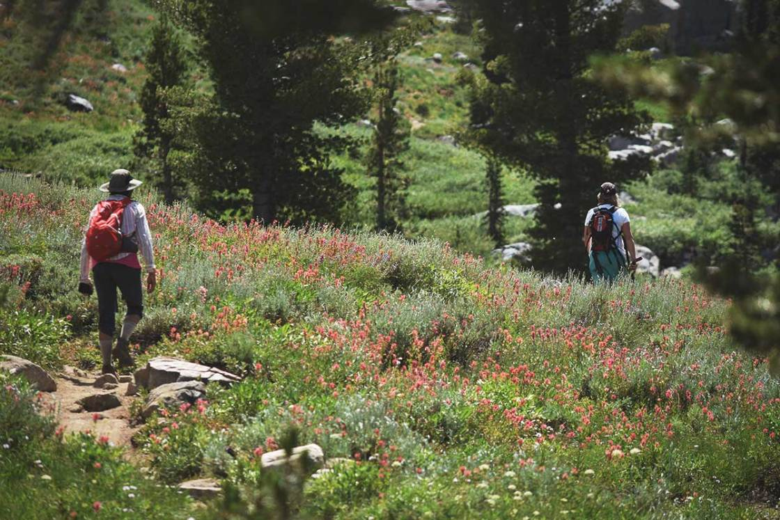 Two women hiking through a field of wildflowers