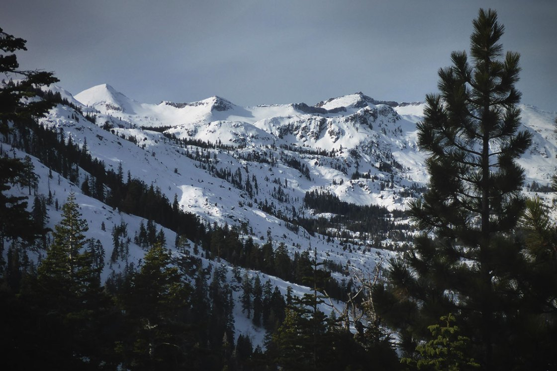 Snow-covered mountain range with trees in the foreground