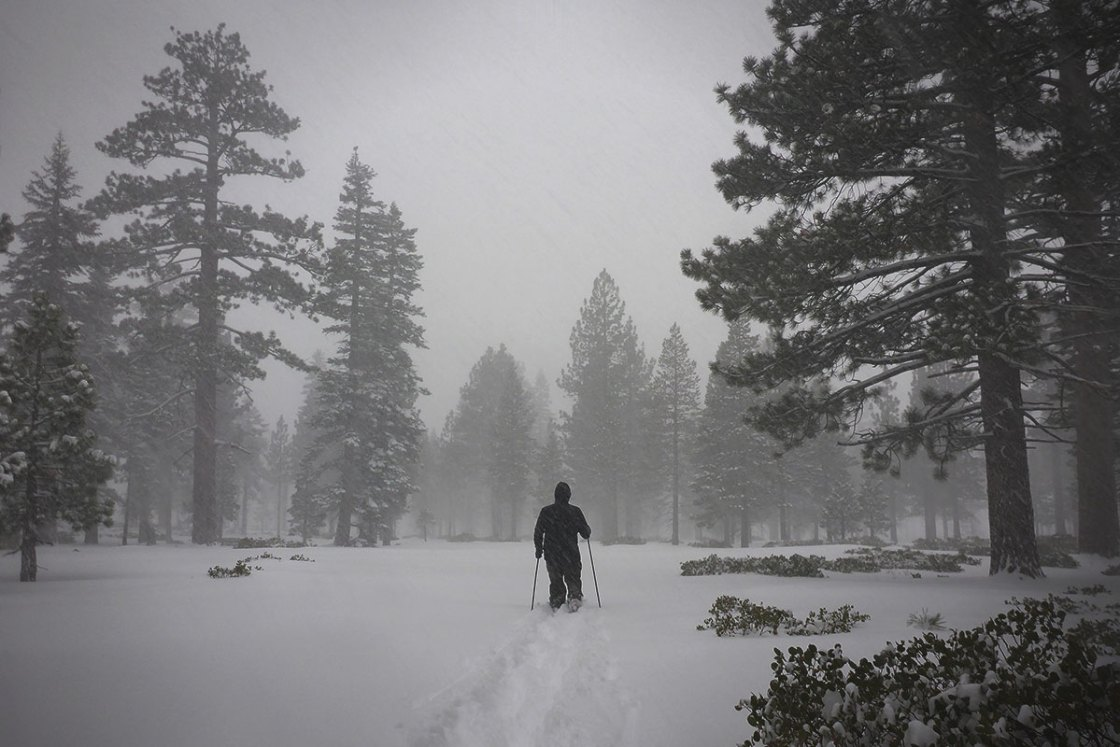 Snowstorm with a cross-country skier traveling through the forest