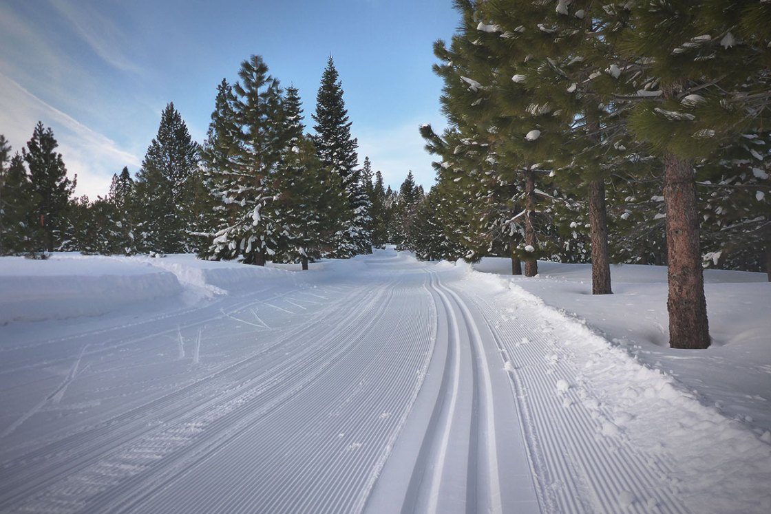Groomed cross-country ski tracks flanked by pine trees