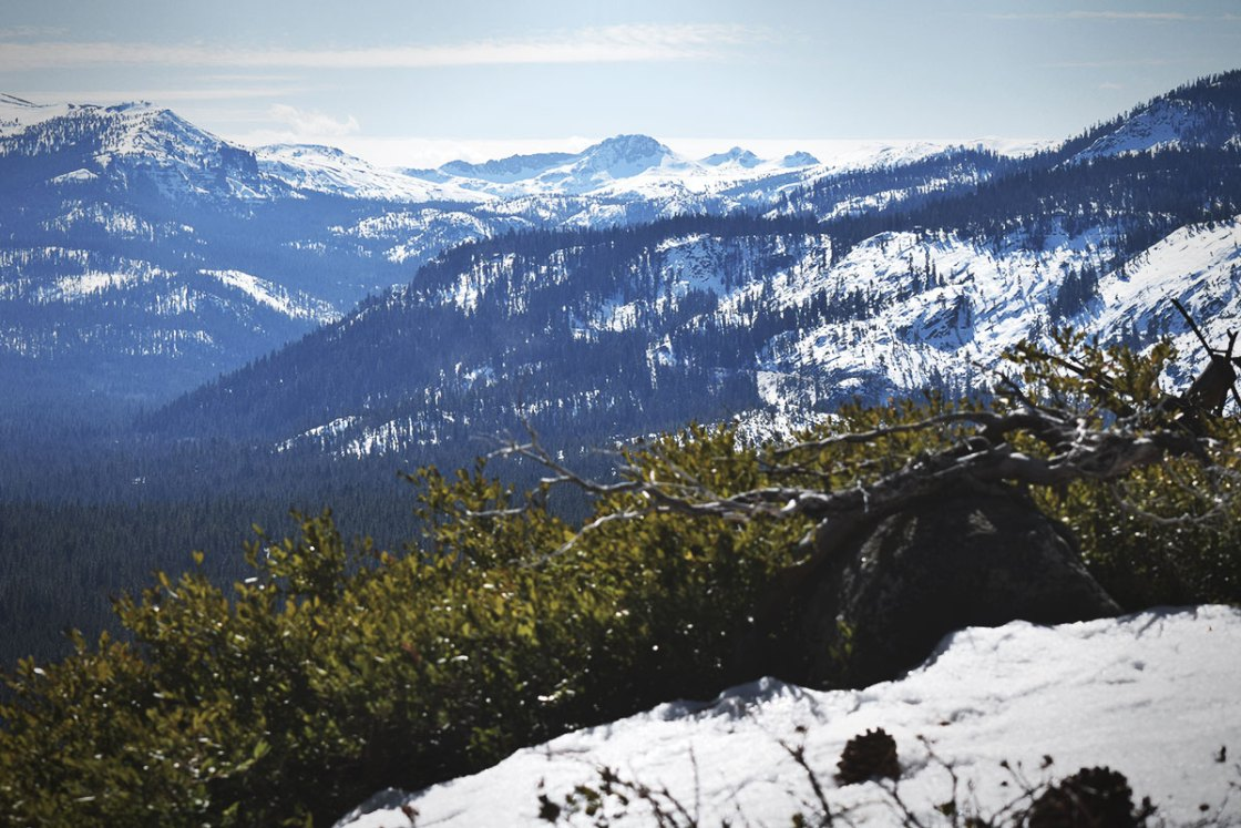 Manzanita on a hillside and snow-covered mountains