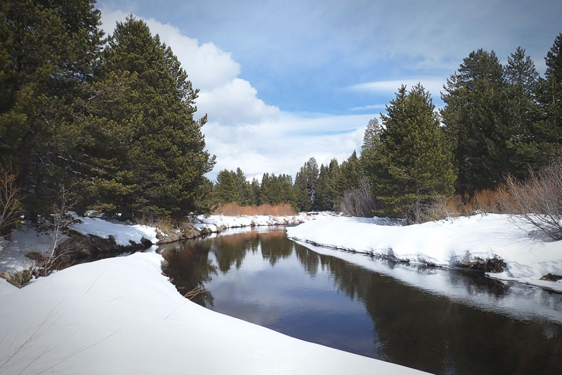 Pine trees and snow banks along a river in winter