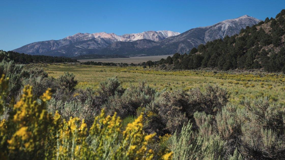Sage brush and mountains