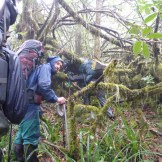 The rugged jungle bushwhacking on the side of Kilimanjaro